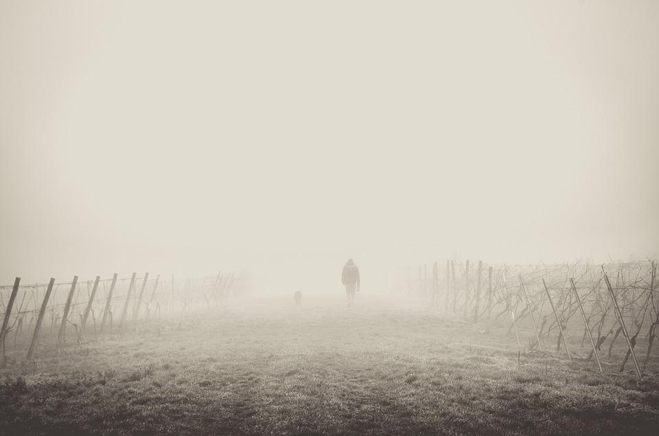fog-1209205_960_720